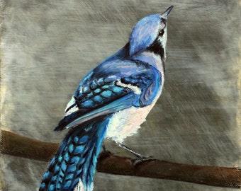 Blue Jay Giclee Print