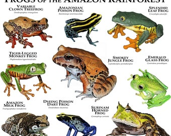 Frogs of the Amazon Rainforest