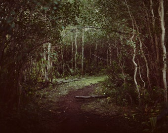 Wooded Path Photograph Print