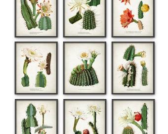 Cactus Print Set Of 9 - Vintage Cactus Illustration - Cacti Wall Art - Botanical Home Decor - Antique Cactus Book Plate Illustration - AB550