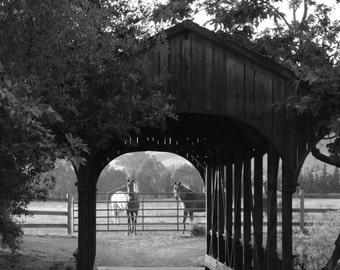 Covered Bridge and Horses