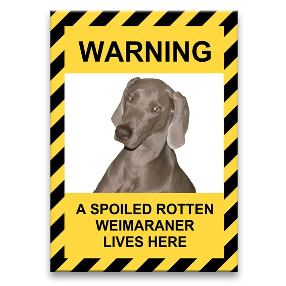 Weimaraner Spoiled Rotten Funny Fridge Magnet