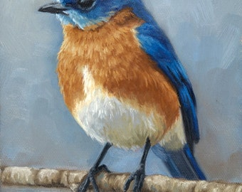 Eastern Bluebird - bird painting - Open edition print