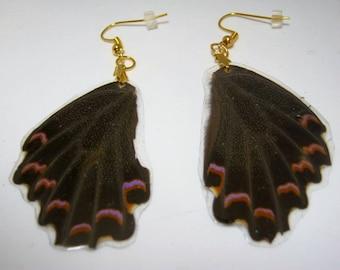 Real Butterfly Wing Earrings Butterfly Earrings Vintage Wings 1970's Butterfly Wings Butterfly Jewelry Butterfly Earrings