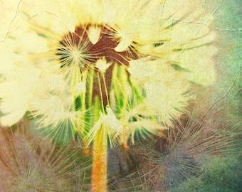 "Dandelion Clock Fine Art Card 5 x 7"" Photographic Botanical Greeting Card 'Solarising Seeds' Lilac aqua and creamy tones."