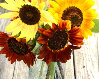 Sunflower Seeds, Autumn Beauty Sunflowers, Mixed Color Sunflowers, Great for Cut Flower Gardens and Butterfly Gardens