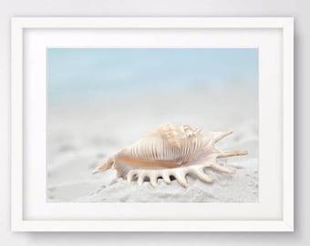 Seashell Art, Seashell Photography Large Wall Art Prints Digital Download Nautical Decor, Beach Decor Coastal Printable Art Digital Prints