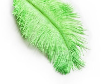 """Ostrich Plumage Feathers Dyed Bright Green 6-8"""" 