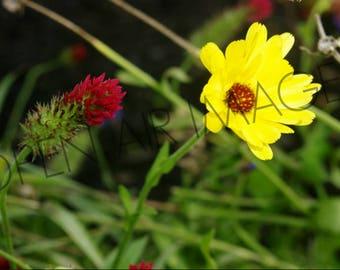 Opposite Flowers - Photograph