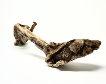 Driftwood Piece Weathered Burled Wood From the Sea Medium Size for Decor or Repurpose