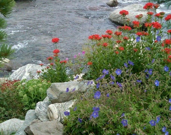 Breckenridge Stream, Colorado, Wild flowers, Moutains