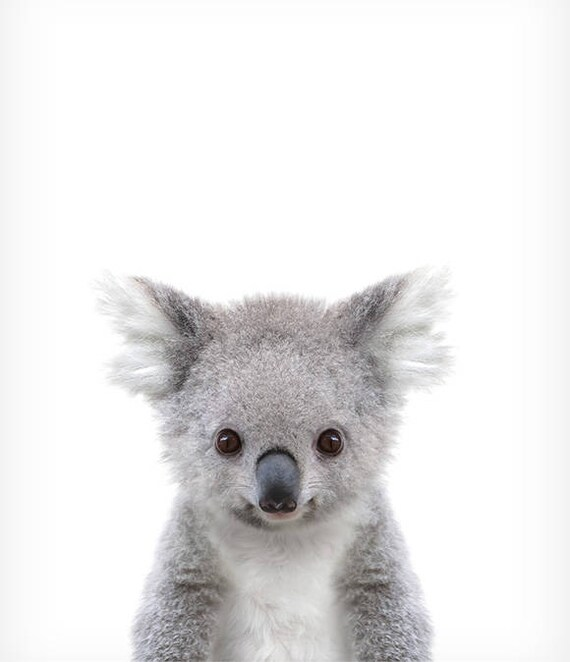 Koala print baby animal prints zoo animal nursery the crown - Pictures of koalas and baby koalas ...