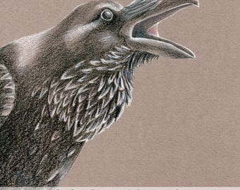 Raven Original Drawings, Set of 2