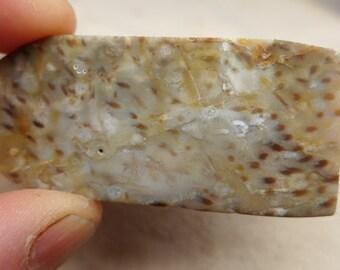 Polished Petrified Palm Preform
