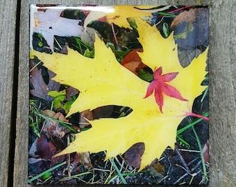 "4"" x 4"" Fall Leaves, Resin Coated"