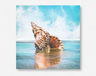 Seashell Photography, Sea Shell Photography, Seashell Photo, Sea Shell Photo, Seashell Art, Sea Shell Art, Seashell Print, Sea Shell Print