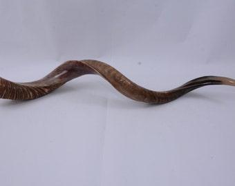 "Kudu Horn Shofar Half Natural Half Polish Yemenite 36""  91 cm best sound best price best quality"