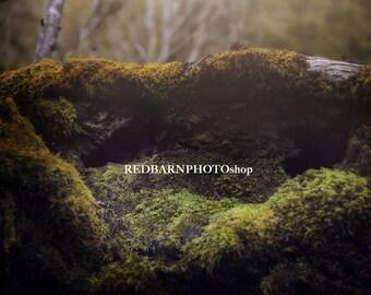 Forest Digital Background - Mossy Tree Nest