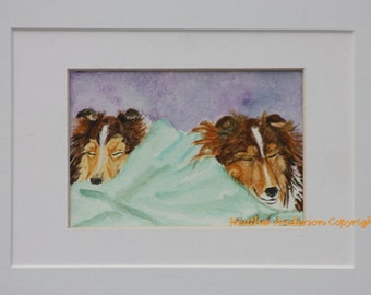 "Sheltie sable Pups, ""Nap Time"",  original 3 x 4.5 painting,  watercolor, Heather Anderson dog artist"