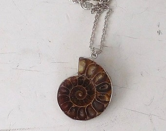 Ammonite Fossil Shell Necklace, Fossilized, Real Ammonite, Nautilus, Fossil Pendant, Long Chain Necklace, Silver Tone, Mens Necklace