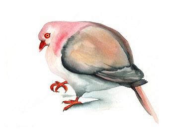 Pink Pigeon print