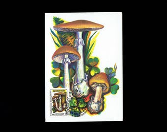 Russia 5454 Toad Stools 4k Amanita Muscaria May 15, 1986 Continental Postcard First Day Cover lot #rus2cpc
