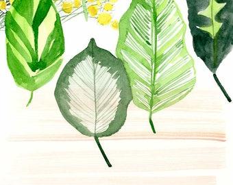 Kamille-Blumen & Blätter archivalische Druck von Lindsay Gardner