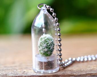 Live Cactus Necklace // Snowball Terrarium Necklace