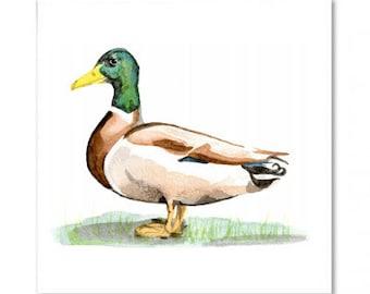 The Mallard Dabbling Duck Greeting Card