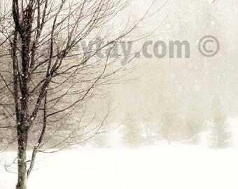 Winter Tree Print, Nature Photography, White, Brown, Snow Landscape, Rustic, Cabin Decor, Tree in Blizzard