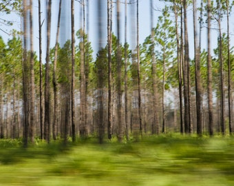 Blurred Trees whizz by in Okefenokee Swamp - Digital Download