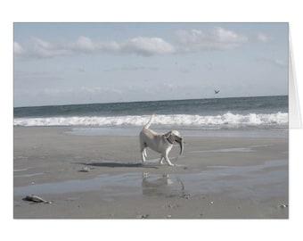 Mullet Pup III
