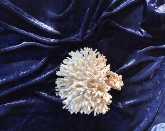 natural dried vintage coral
