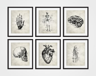 Anatomy Art Prints, Hand, Heart, Foot, Brain, Skull, Skeletal Human Anatomy Set of Six 5x7, 8X10, 11x14 Medical Science Doctor Decor
