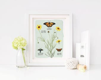 Coreopsis Botanical Illustration, Coreopsis Monarch butterfly art, Coreopsis flower print