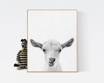 Cute Print, Sheep print, Sheep Photo, Printable Wall Art Gift, Cute animal, Nursery Decor, Black and White Animal Photography, Grey White