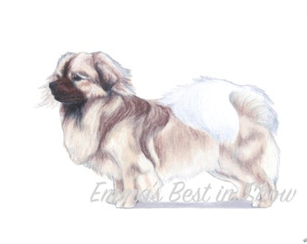 Tibetan Spaniel Dog - Archival Fine Art Print - AKC Best in Show Champion - Breed Standard - Non-Sporting Group - Original Art Print