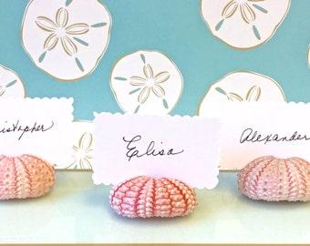 20 Seashell Place Card Holders - Natural Pink Sea Urchins - Beach Weddings, Beach Showers, Beach Dinners, coastal, sea shells, seashells