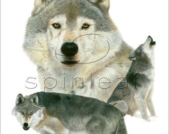 Wolf Art Print -- Wildlife Illustration of Grey Wolves