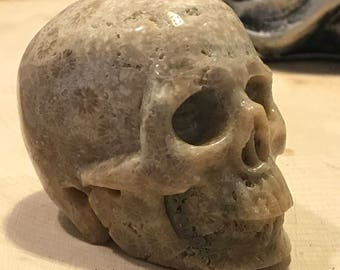 "Skull 2.0"" Coral Fossil Jasper *Carved Crystal* Realistic* Crystal Healing* Awesome"