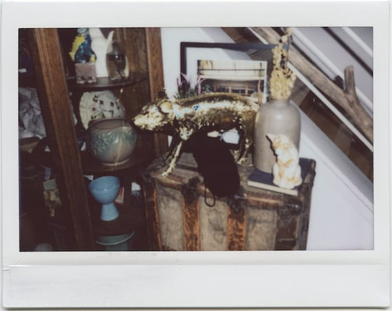 Test Photo of my Golden Pig (Last of the Fuji Instax Wide Shots)
