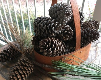 "3"" Georgia Loblolly Pine Cones (12 QTY)"