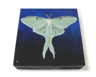 Lunar Moth painting 6x6 - realistic entomology art gift - green moth - green butterfly - nocturnal insect art - original painting square