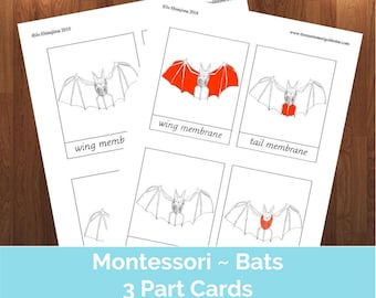 Volcano montessori 3 part cards pdf parts of volcano cards montessori parts of bat 3 part cards pdf education pdf educational printable montessori three part cards bats bat study bat cards ccuart Image collections