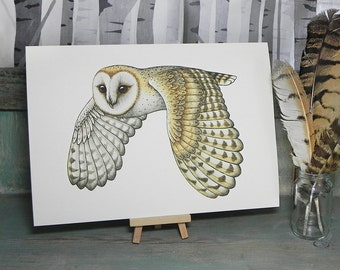 Barn Owl Illustration - A4 Print on 270gsm Card available in 3 Colours
