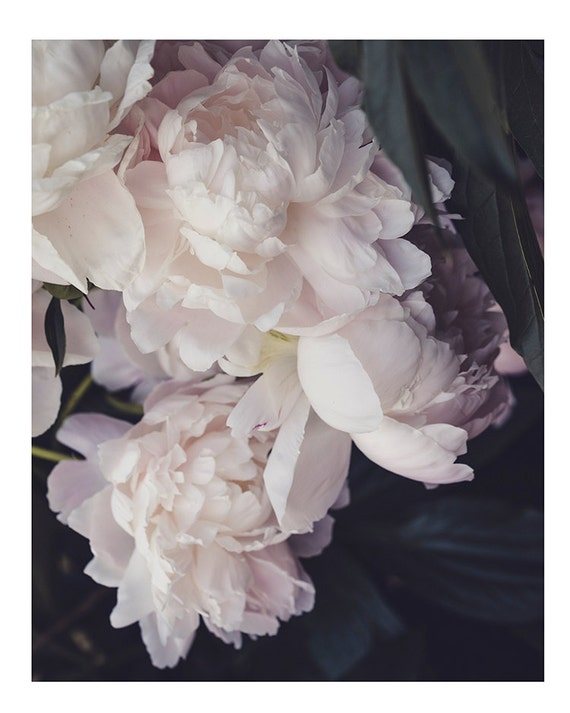 Peony, Still Life Print, Nature, Flower Art, Pink Peonies Print, Nursery Decor, Pastel Art, Girls Room Photography, Botanical Photo
