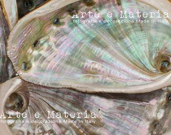 Conchiglia azzurra.  Madreperla azzurra e beige, colori pastello. Fotografia macro di conchiglia a spirale, trovata su una spiaggia greca..