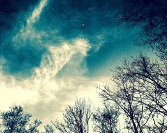 Lunacity, Nature Photography, Luna/Crescent Moon Photo, Night Sky & Trees Photo, Fine Art Photograph, Photo Print, Wall Art