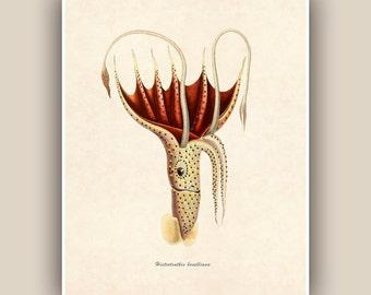 Squid Print,  Vintage Umbrella Squid image print,  Marine Wall Decor, Nautical art,  Mixed Media Collage  Print, Coastal Living