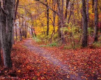 Autumn Path Nature Photography Print, Woodland Pathway, Forest Trail, Fall landscape, Fall Theme, Cottage decor